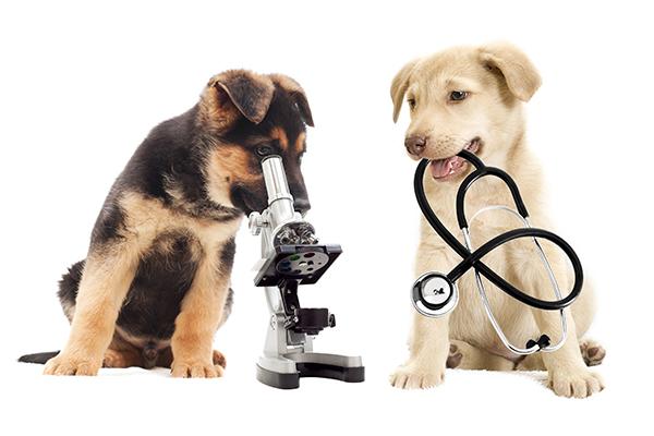 Veterinaria Mundo Animal